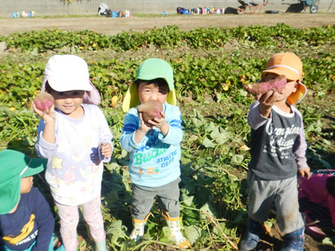 手作り野菜